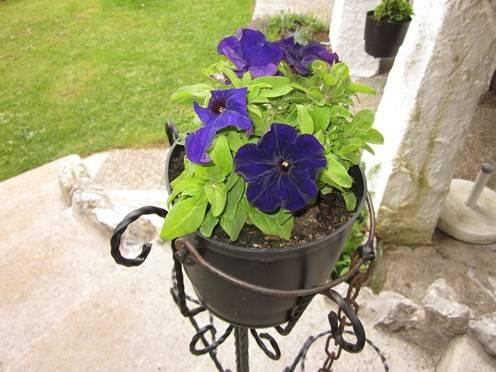 Support en fer forg d corations pour le jardin for Decoration en fer forge pour jardin