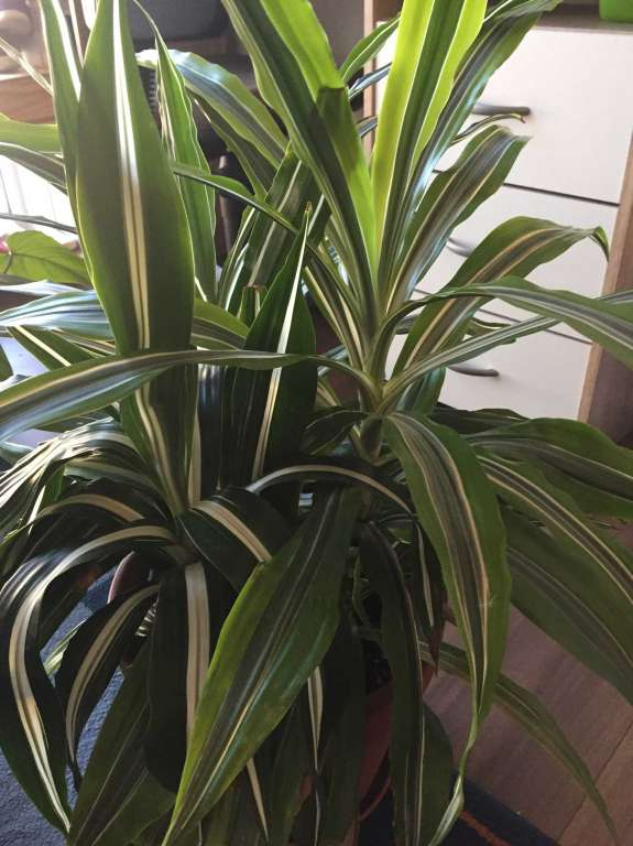 plantes vertes habitu es au balcon b timents travaux publics. Black Bedroom Furniture Sets. Home Design Ideas