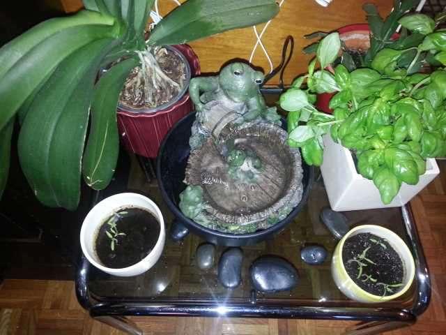 Adorable Petite Fontaine D'Intérieur Grenouille Zen - Bricolage