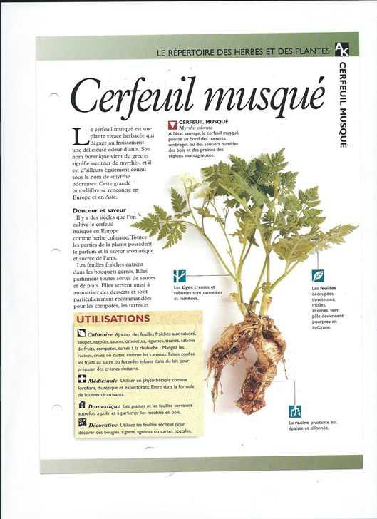 le monde secret des herbes et plantes livres de jardinage