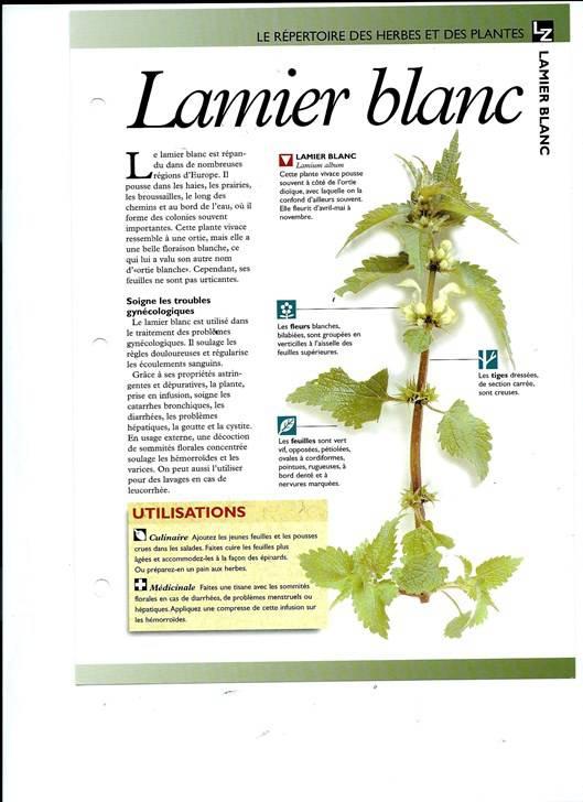 Le monde secret des herbes et plantes livres de jardinage for Jardinage le monde