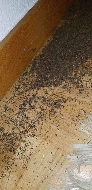 Ameisen im Haus und Garten bekämpfen. Schweiz, Thurgau.