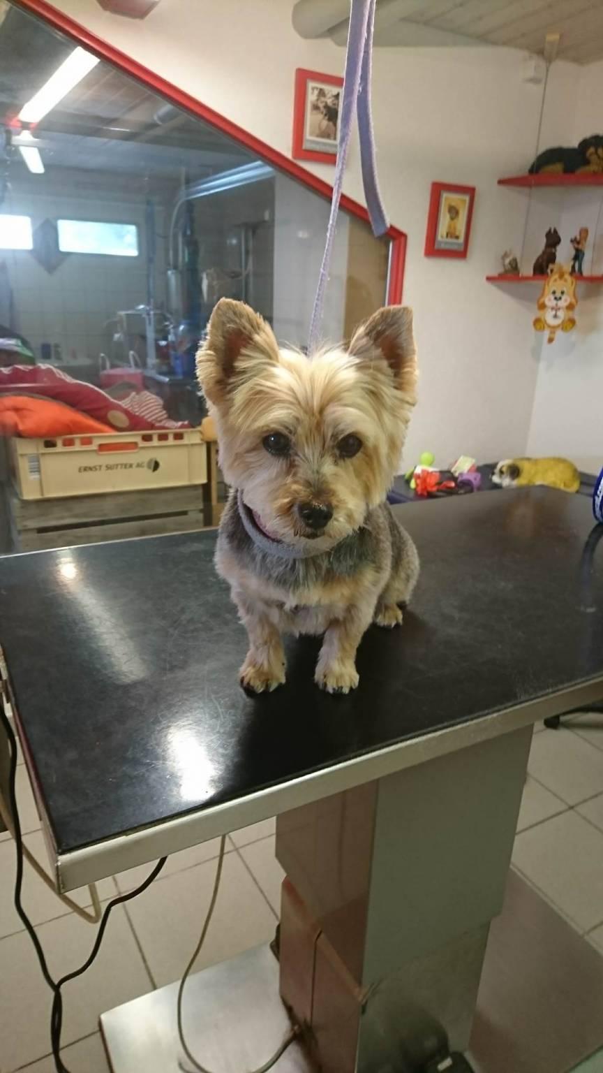 De bon poil salon de toilettage pour chiens romont - Salon toilettage chien ...