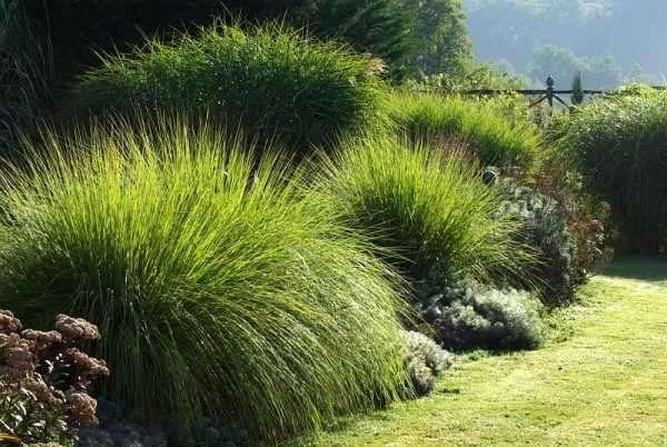 Cr ation et entretien jardin japonais topiaieres zen for Annonce entretien jardin