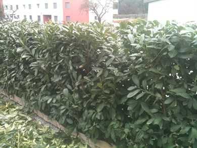 Travaux de jardinage tailles la haie for Cherche travaux jardinage