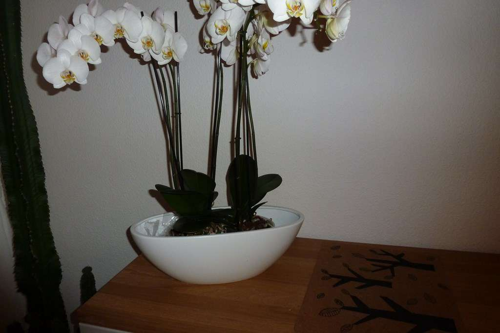 Cache pot pour orchidée